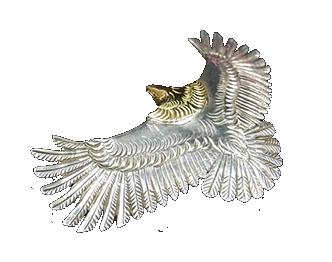 ファーストアローズ 頭金 大イーグル P-100 画像